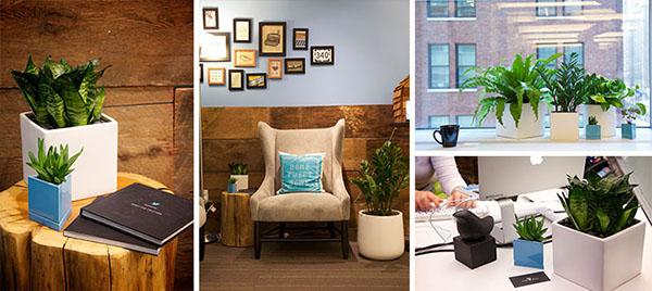 Delightful Modern Office Plants